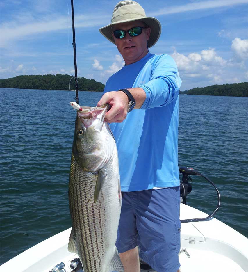 Catching lake lanier august stripers captain mack 39 s for Lake lanier striper fishing