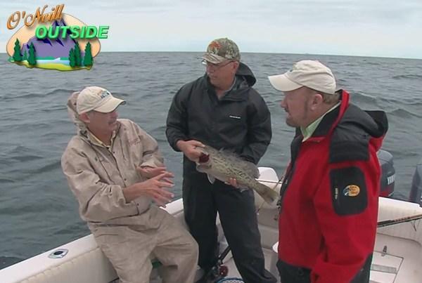 Gulf Coast Grouper